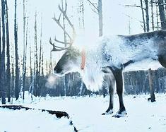 林海雪原,银白色的呼伦贝尔