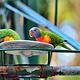 可伦宾野生动物保护园
