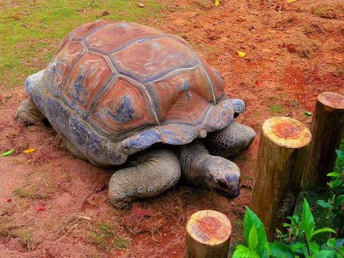 龟路艰辛图片