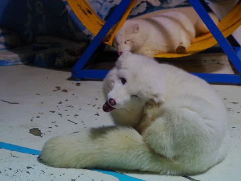 哈尔滨极地馆旅游景点图片
