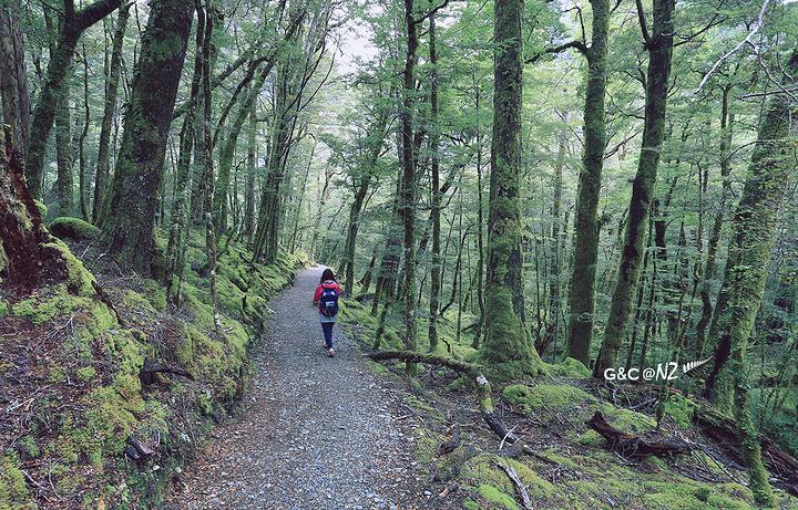 """""""且经过和美女咨询得知新西兰最著名的步道之一——路特本步道就在附近,二话不说开车就去了路特本步道..._路特本步道""""的评论图片"""