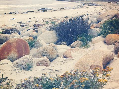 圆石滩旅游景点图片