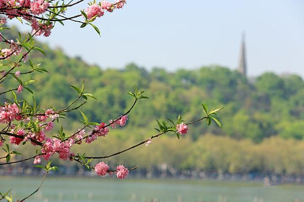 春日杭州赏花记旅游图片