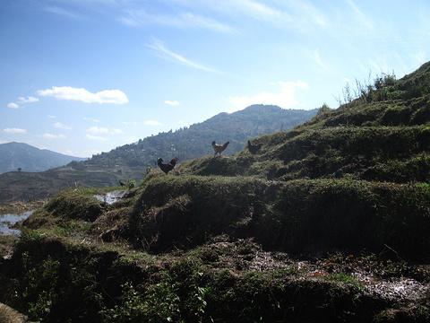 那诺梯田旅游景点图片