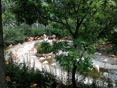 大连森林动物园旅游景点攻略图