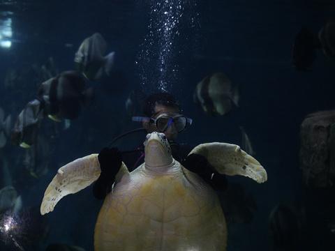 无锡海底世界旅游景点图片