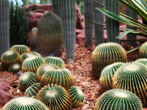上海辰山植物园旅游景点图片