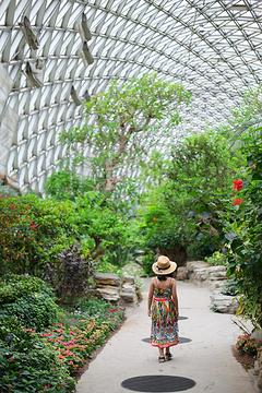 上海辰山植物园的图片