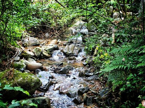 森林氧吧旅游景点图片