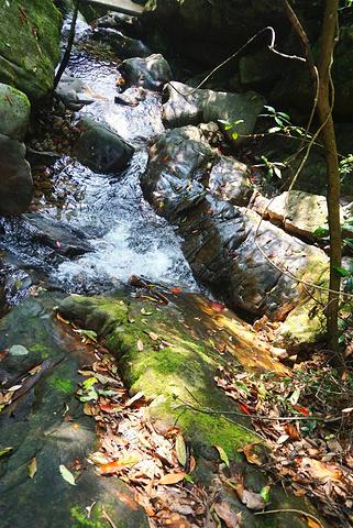 """""""...还是自己慢慢走下来好啦,建议原路返回,另一边下来相对景色少些,只有树林没有溪流,会觉得有点小闷_千岛湖森林氧吧""""的评论图片"""
