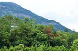 黄龙湖森林公园