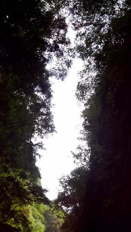 """""""首先看到山青水绿的风景瞬间心里就舒畅了很多,忍不住要狠狠的呼吸几口这大山里的新鲜空气_金丝峡景区""""的评论图片"""