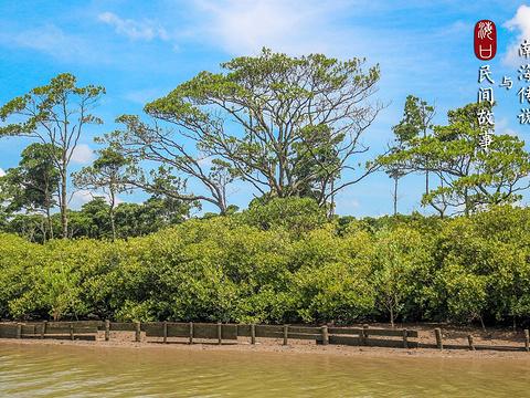 东寨港红树林旅游景点图片