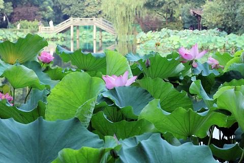杭州旅游景点图片
