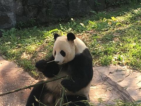 熊猫谷旅游景点图片