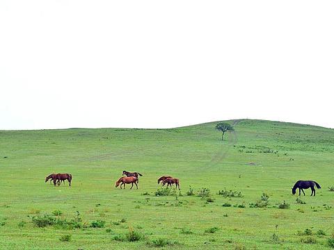 木兰围场旅游景点图片