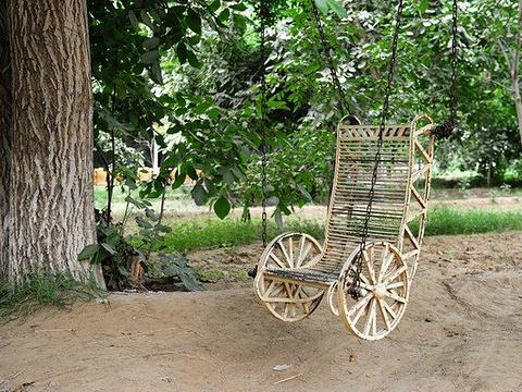 核桃王树旅游景点图片