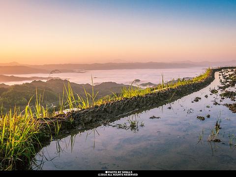 紫鹊界梯田旅游景点图片