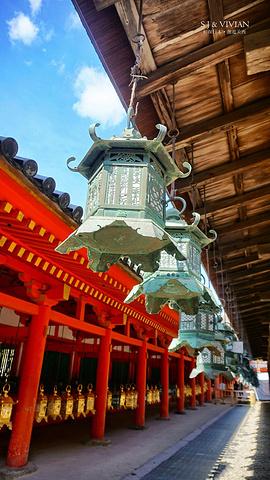 """""""奈良公园、春日大社和东大寺三个景点临近,步行就可以到达了。挂着可爱鹿造型的许愿签_春日大社""""的评论图片"""