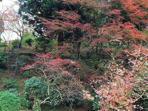 西巖殿寺旅游景点图片