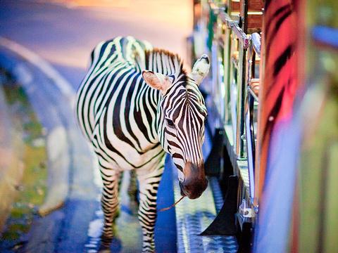 清迈夜间动物园旅游景点图片