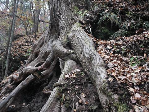 吉林龙湾群国家森林公园旅游景点图片