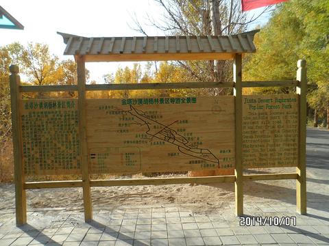 金塔沙漠森林公园旅游景点图片