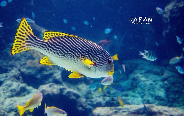 """""""停车场距离美之海水族馆不远,司机先生嘱咐..._冲绳美丽海水族馆""""的评论图片"""