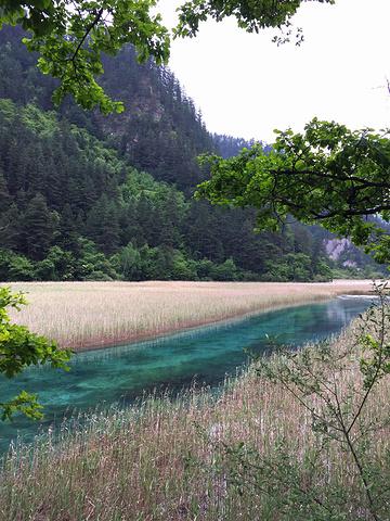 """""""沿着栈道走到了芦苇海,春天的芦苇黄绿相间,并没有秋天来的漂亮,但是芦苇海中穿过的玉带却非常美_芦苇海""""的评论图片"""