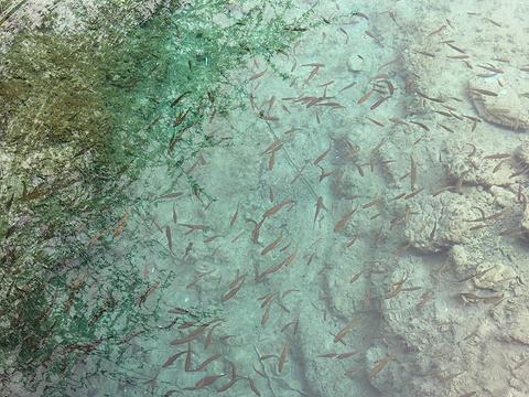 火花海旅游景点图片