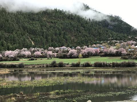 波密桃花沟旅游景点图片