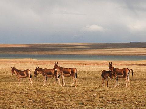 可可西里自然保护区旅游景点图片