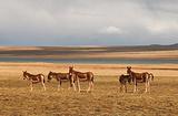 可可西里自然保护区