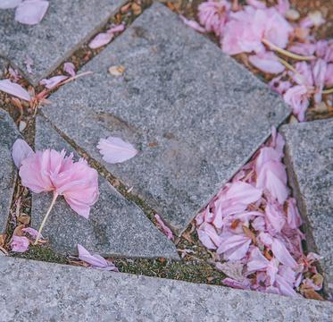 紫藤园旅游景点攻略图