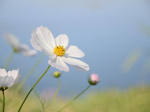 洱海月湿地公园旅游景点图片