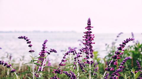海埂公园的图片