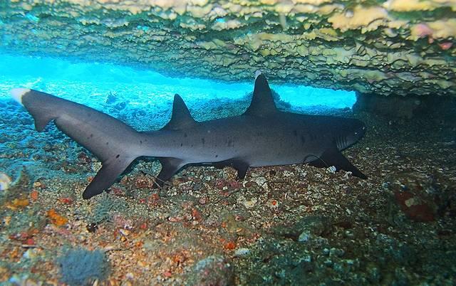 大家都知道雌雄交配可以繁衍后代,但是仅凭一鲨之力便可繁衍的你可见过?
