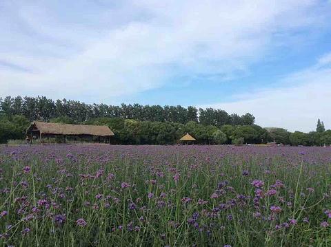成都普罗旺斯国际薰衣草庄园旅游景点攻略图