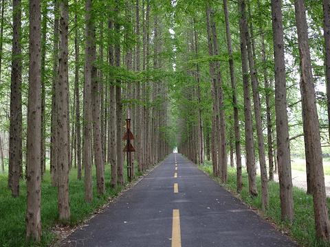 黄海森林公园旅游景点图片