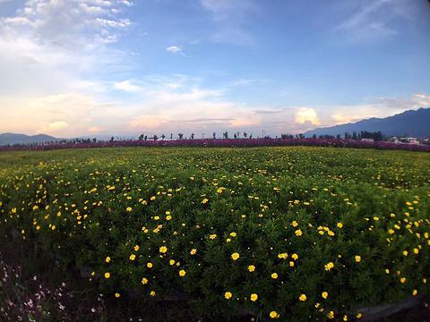 大理云上花海旅游景点图片