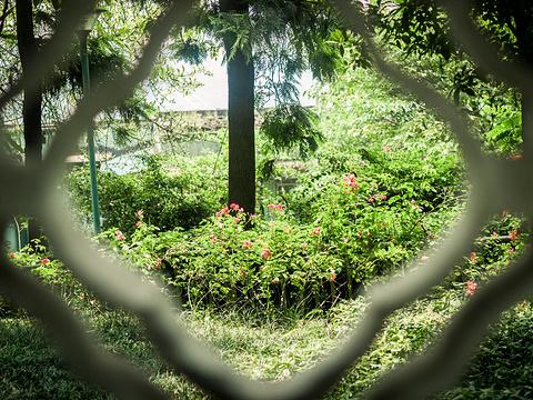 枇杷山公园旅游景点图片