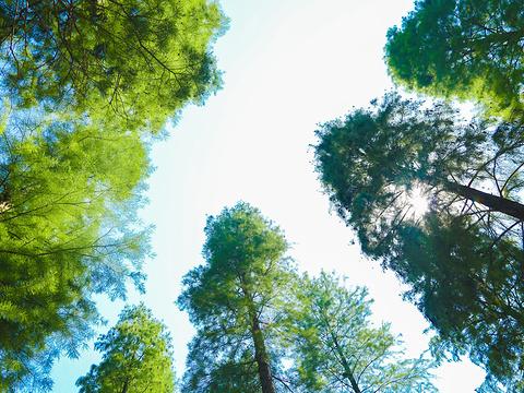 平山森林公园旅游景点图片