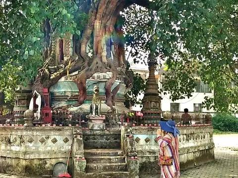 树包塔旅游景点图片