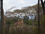内罗毕旅游景点攻略图片