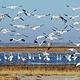 莫莫格国家级自然保护区