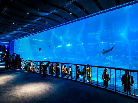 S.E.A.海洋馆旅游景点图片