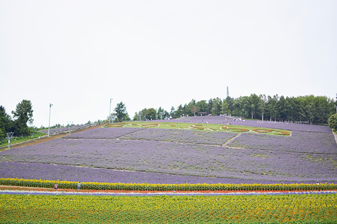 富田农场旅游景点攻略图