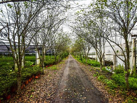 云澜湾·四季花海乐园旅游景点图片