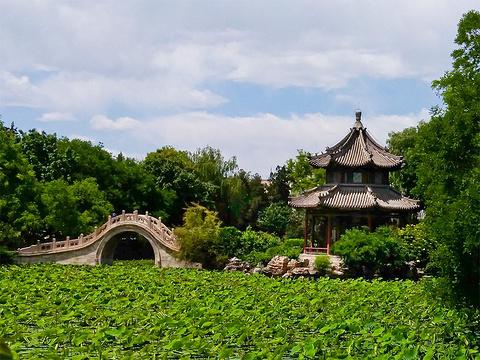 古莲花池的图片