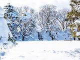 静冈县旅游景点攻略图片
